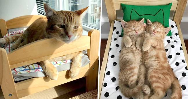 IKEA Say Doll Beds Aren't Made For Cats But Owners Disagree