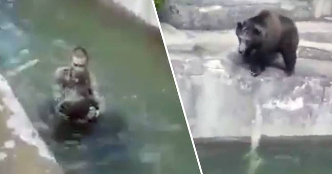 Drunk Man Who Fought With Bear In Zoo Fined £6,000 For Not Wearing Mask