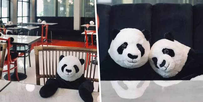 Restaurant In Thailand Sits Panda Bears At Tables To Keep Diners Company While Social Distancing