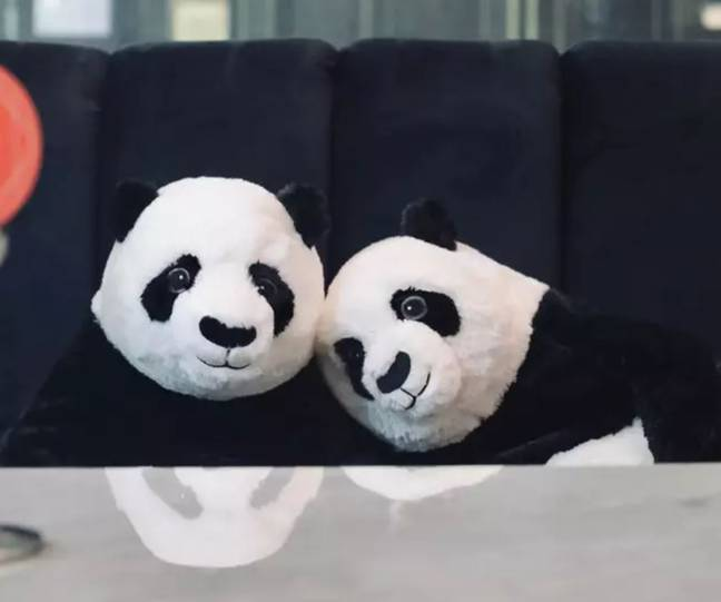 Restaurant Sits Panda Bears At Tables To Keep Diners Company While Social Distancing