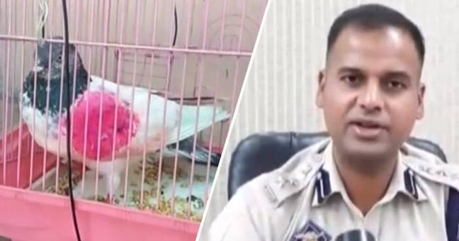 Pigeon Arrested In India On Suspicion Of Being Spy For Pakistan