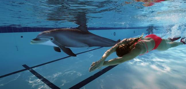 swimming with robot dolphins