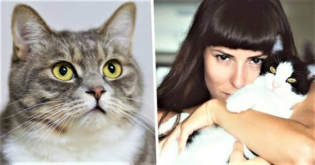 New Dating App Connects Fellow Cat Lovers