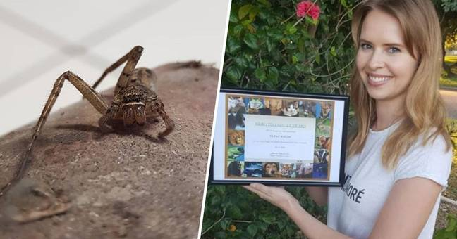Woman Who Nursed Spider Back To Health After Stepping On It Given PETA Award
