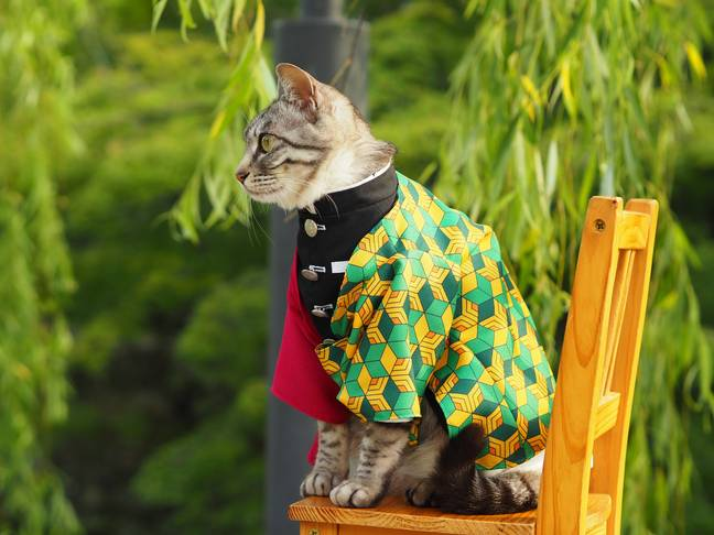 cat dressed up in anime