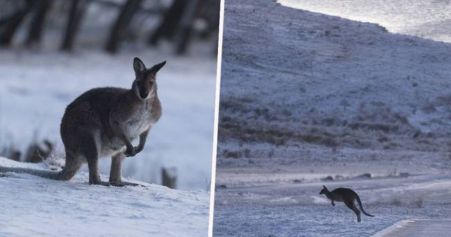 Snow Falls In Parts Of Australia For First Time In 15 Years