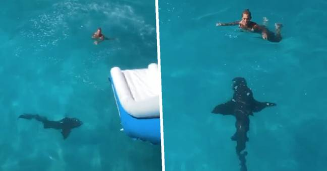 Florida Woman Greeted By Huge Shark After Sliding Into Sea Off Yacht In The Bahamas