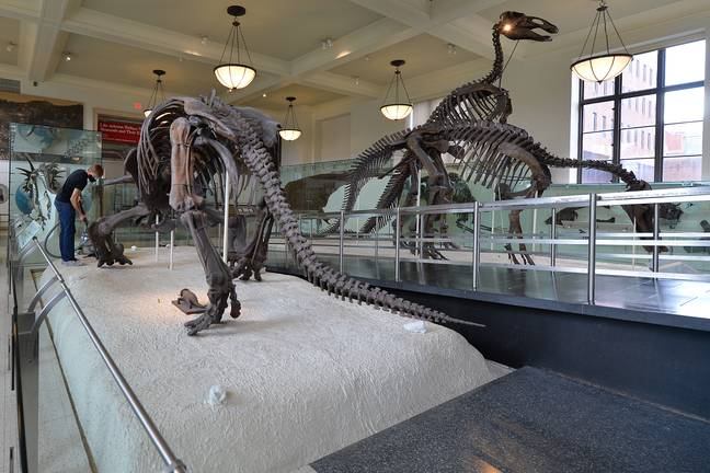 NY: Dinosaurs Cleaned As Museum Of Natural History Set To Open