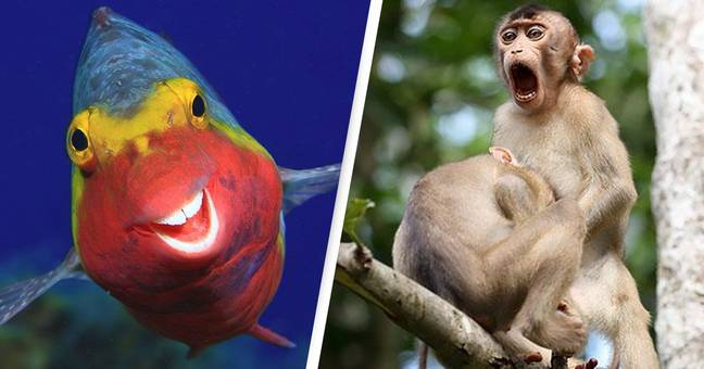Comedy Wildlife Photo Finalists Announced And We Can't Stop Laughing