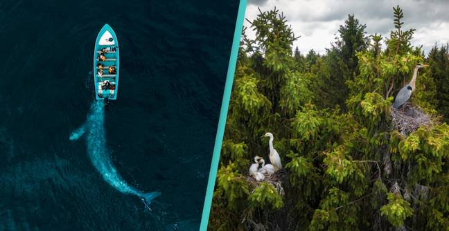 Drone Photography Award Winners 2020 Show Majesty Of Nature