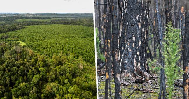 Destruction Of World's Forests Will Unleash More Pandemics, Scientists Warn