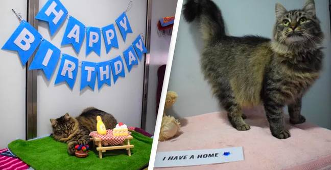 Cat Who Found Fame When No One Came To Her Birthday Finds Forever Home
