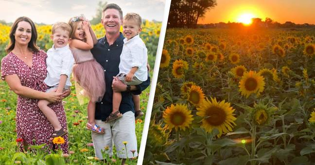 Farmer Plants More Than 2 Million Sunflowers To Help Make People Happy