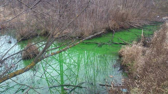 Russian River possibly dyed green