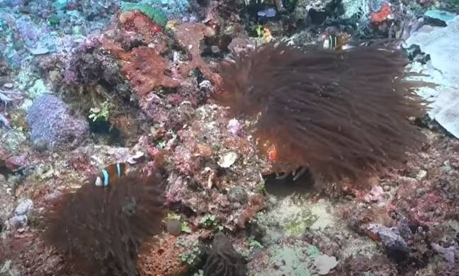 Newly discovered reef in Australia