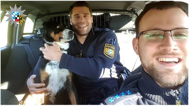 Police rescue concerned-looking dog