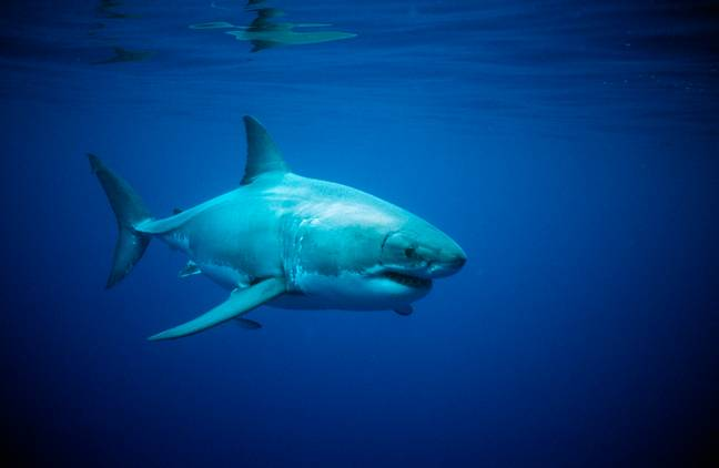 shark (PA Images)