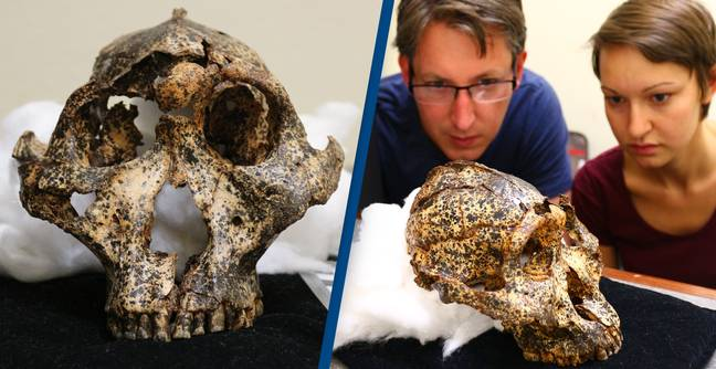 Archaeologists Discover 2-Million-Year-Old Skull Of Distant Human Cousin
