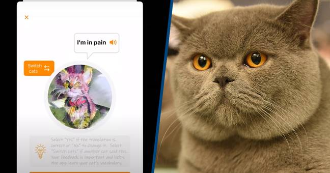 Cat Noises Can Now Be Translated Through A New App