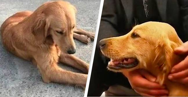 Loyal Dog Makes Incredible 62-Mile Journey To Find Her Owners