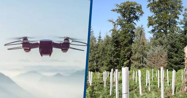 Flash Forest Drones To Plant One Billion Trees By 2028