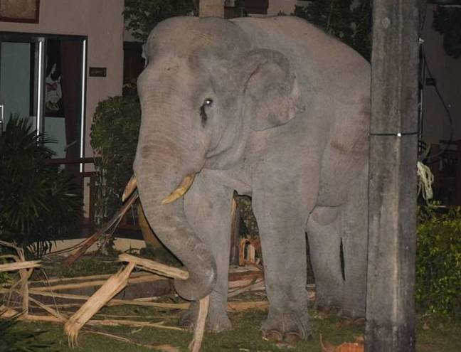 Elephant wanders into gardens in Thailand
