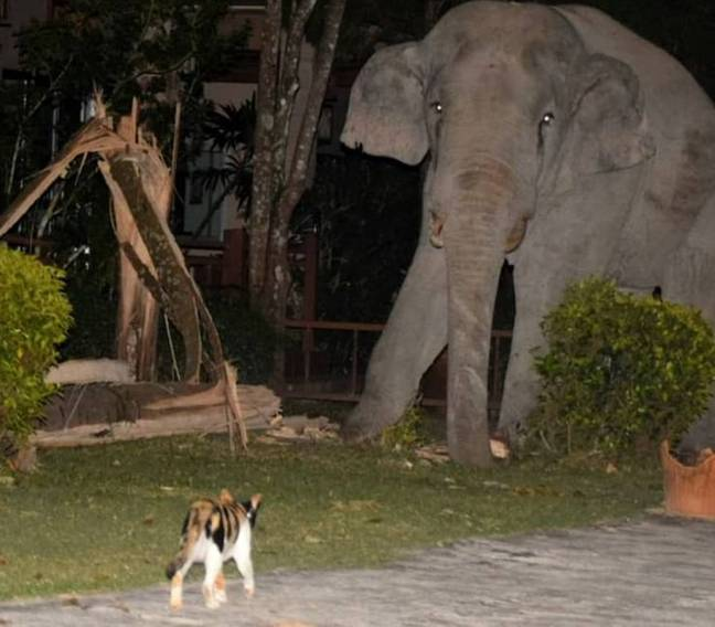 Cat stands up to elephant in garden