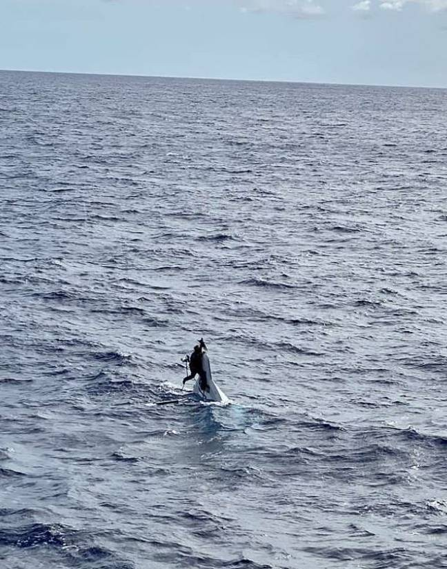 Sailor, 62, Who Vanished At Sea Found Alive 43 Hours Later