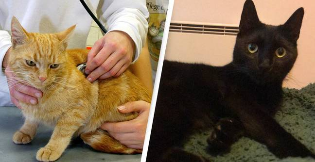 All Cats To Be Microchipped By Law Under New Government Plans