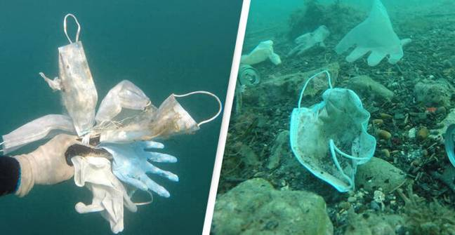 More Than 1.5 Billion Face Masks Entered The Ocean This Year
