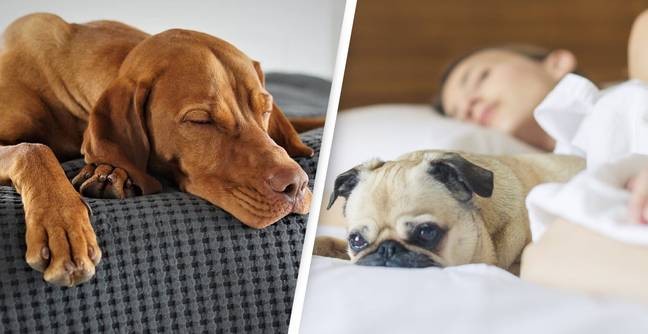 Sleeping With Your Dog In Your Bed Is Actually Really Good For You, Says Study