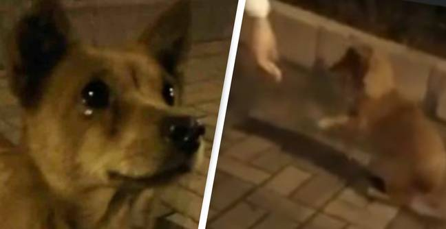 Stray Dog Cries Tears Of Joy After Kind Stranger Feeds Him On The Street
