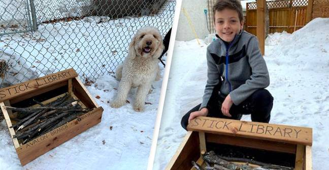 Genius 10-Year-Old Makes Stick Library In Local Park For Neighbourhood Dogs