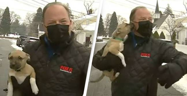 Reporter Can't Contain His Glee When Random Puppy Interrupts His Live TV Segment