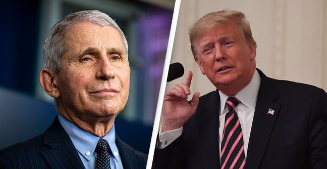 Dr Fauci Says Trump Would Do 'Terrible Things' Anytime He Disagreed With Him Publicly