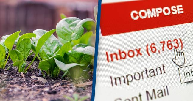 Scientists Have Taught Spinach Plants To Send Emails