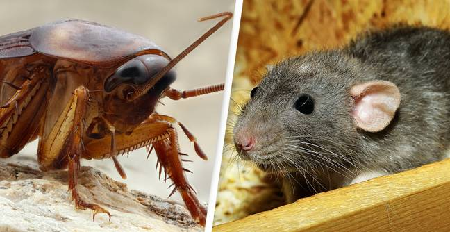 This Zoo Will Name A Cockroach Or Rat After Your Ex For Valentine's Day