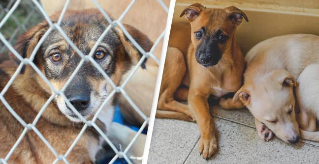 Animal Abusers Will Face $44,000 Fines And 12 Months In Jail Under New Australian Law