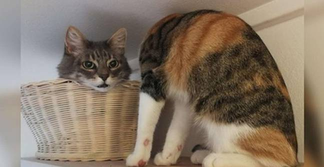 'Terrifying' Optical Illusion Of Headless Cat Confuses The Internet