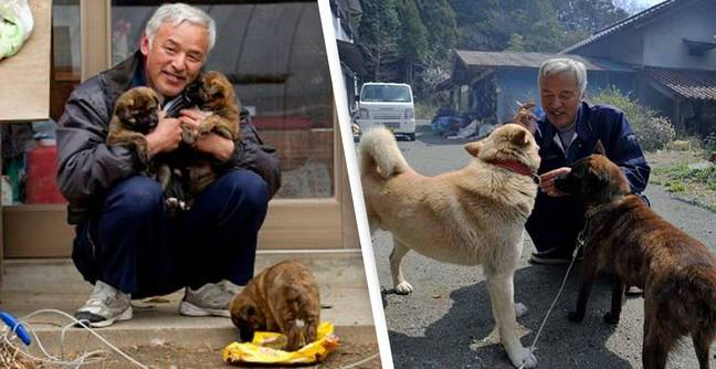 Two Men Still Care For All The Pets Left Behind During Fukushima Nuclear Disaster