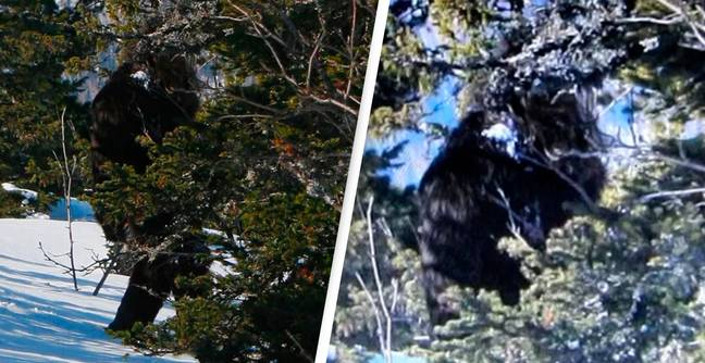 Russia Admits To Faking Yeti Sighting To Attract Tourists To Siberia