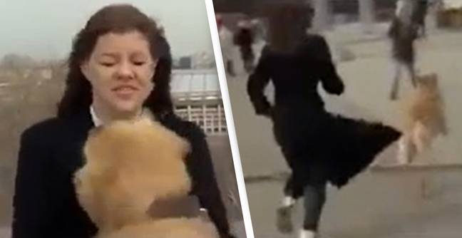 Dog Grabs Reporter's Microphone And Runs Away With It During Live Broadcast