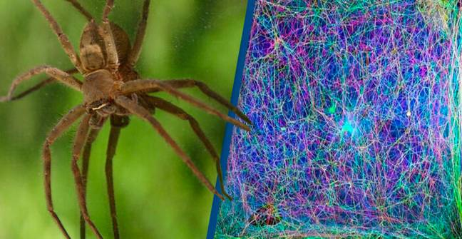 Scientists Translated A Spider's Web Into Music And Experts Think It Might Allow Us To 'Talk' To Them