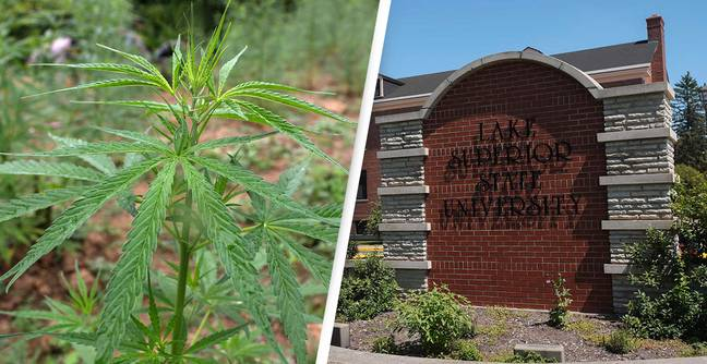 University Becomes First In US To Offer Cannabis Chemistry Scholarship