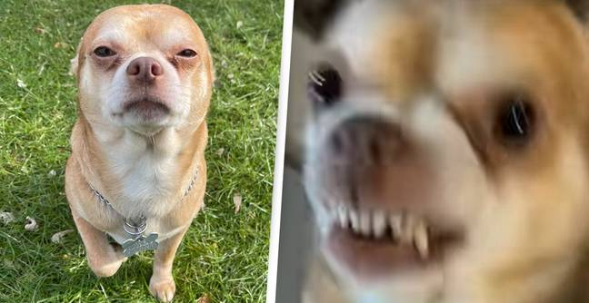 'Neurotic, Man Hating' Dog Wins Hearts With Hilariously Honest Adoption Post