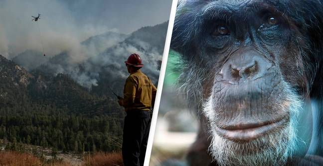 Only 3% Of Habitats On Earth Haven't Been Disturbed By Humans, Study Finds