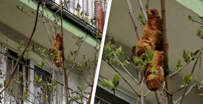 Mysterious Tree Creature That Terrified Locals Turns Out To Be Croissant