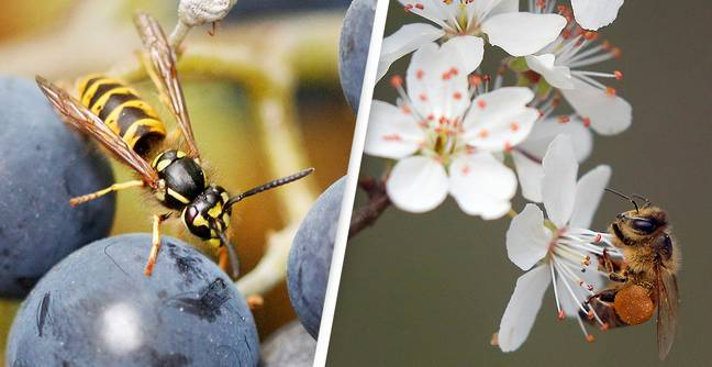 Wasps Could Be As 'Valuable' As Bees If We Just Gave Them A Chance, Scientist Says