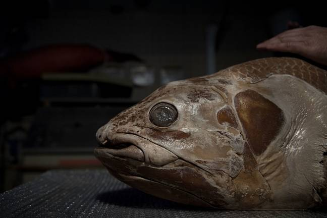Extinct fish in south africa getty