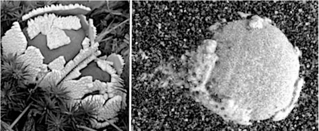 NASA Photos Prove There Is Life On Mars, Scientists Claim Https%3A%2F%2Fwww.unilad.co.uk%2Fwp-content%2Fuploads%2F2021%2F05%2FLeft-Terrestrial-puffball-shedding-crustose-Right-Sol-257-Shedding-the-universal